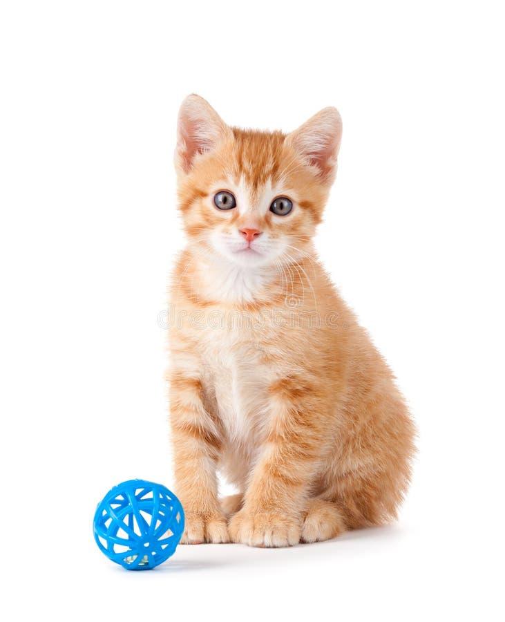 Gatito anaranjado lindo con un juguete en blanco imagenes de archivo