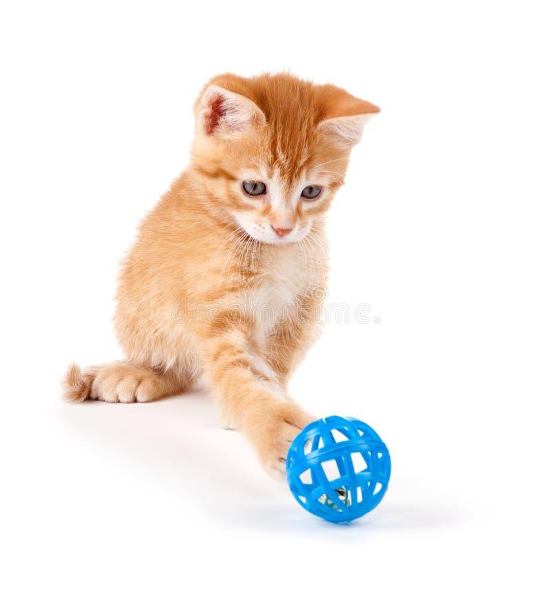 Gatito anaranjado lindo que juega con un juguete en blanco foto de archivo libre de regalías