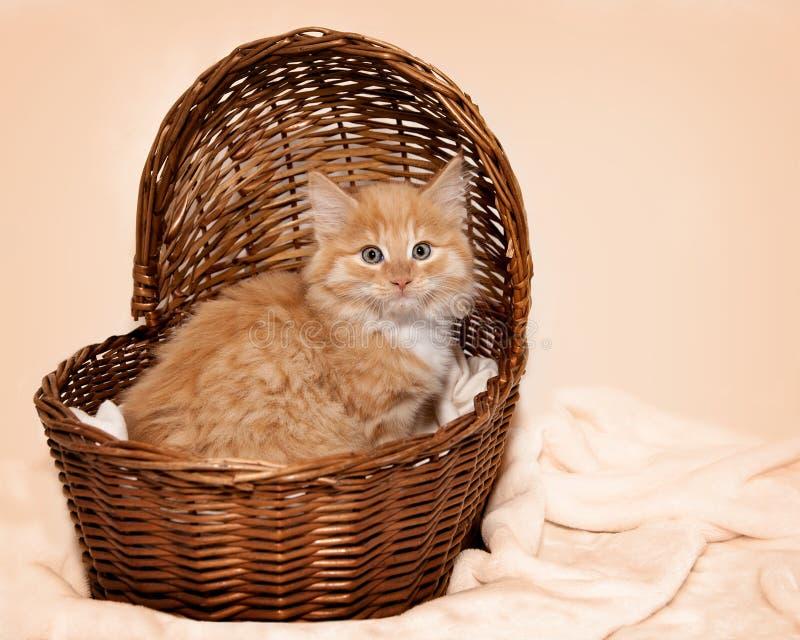 Gatito anaranjado mullido en la cesta de Brown fotos de archivo libres de regalías