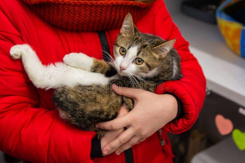 Gatito asustado en las manos de un voluntario fotografía de archivo libre de regalías