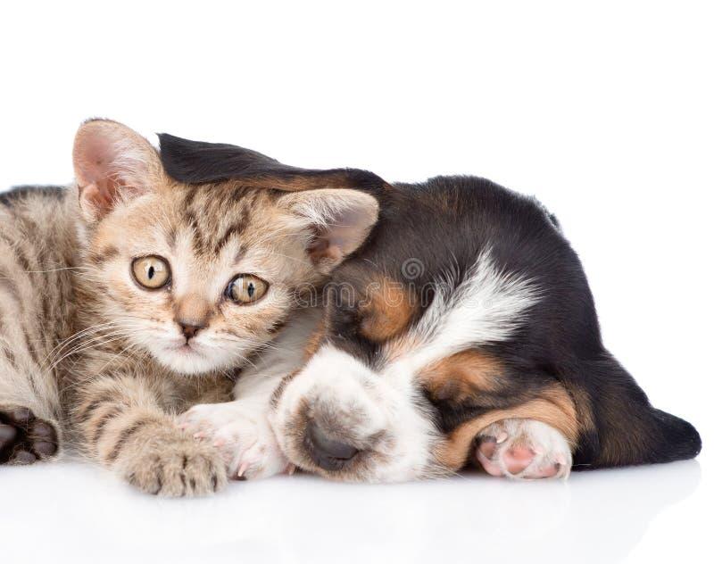 Gatito asustado que miente con el perrito del perro de afloramiento Aislado en blanco imágenes de archivo libres de regalías