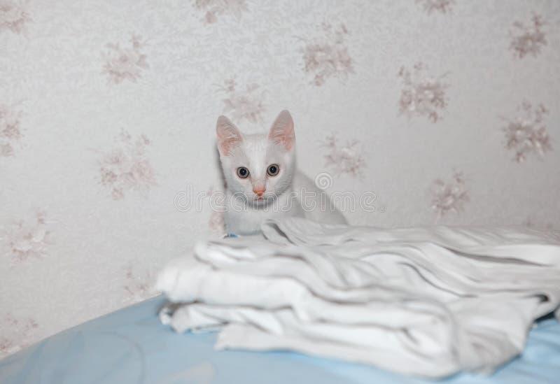 Gatito blanco en la cama imagen de archivo libre de regalías