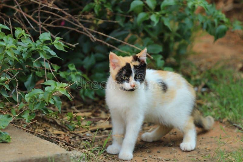 Gatito blanco lindo con las marcas negras y amarillas que se colocan en un jardín imagenes de archivo