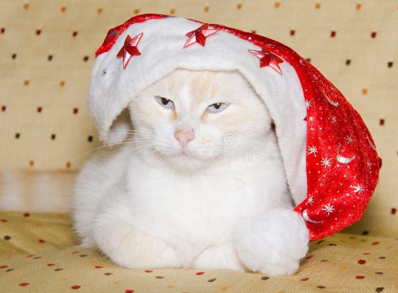 Gatito blanco que lleva el sombrero de santa imágenes de archivo libres de regalías