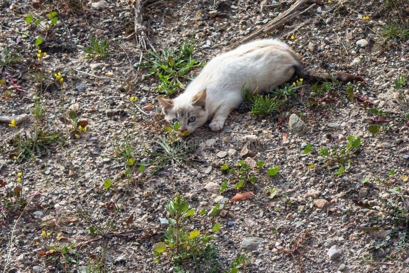 Gatito blanco salvaje fotos de archivo