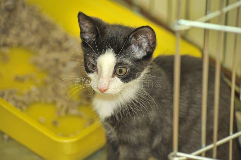 Gatito blanco y negro en una jaula en el refugio fotos de archivo