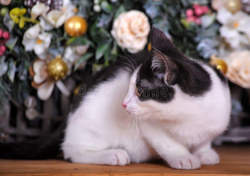 Gatito blanco y negro encantador imagenes de archivo