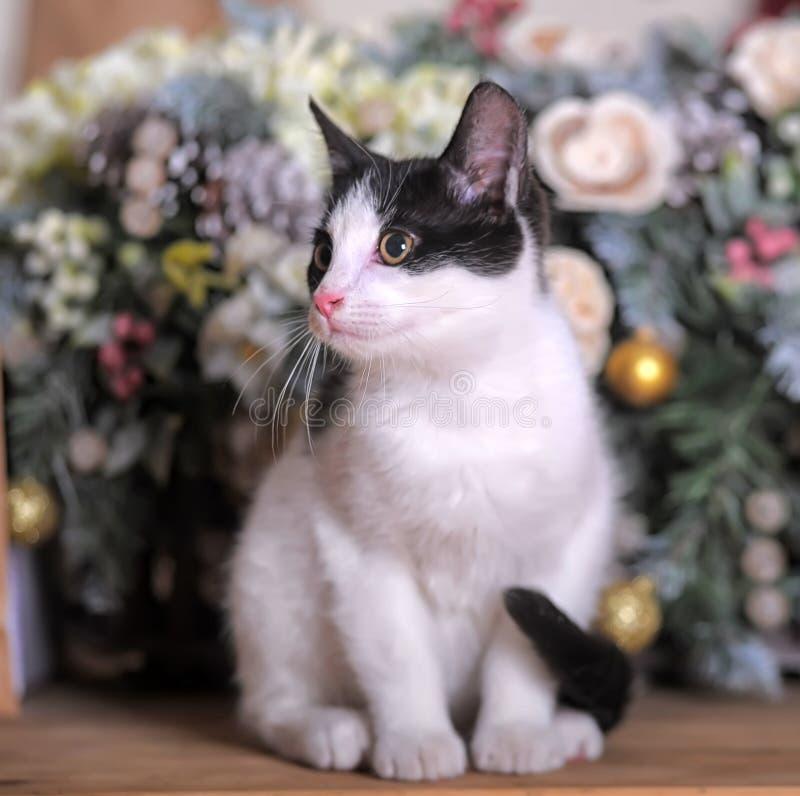 Gatito blanco y negro encantador imagen de archivo libre de regalías