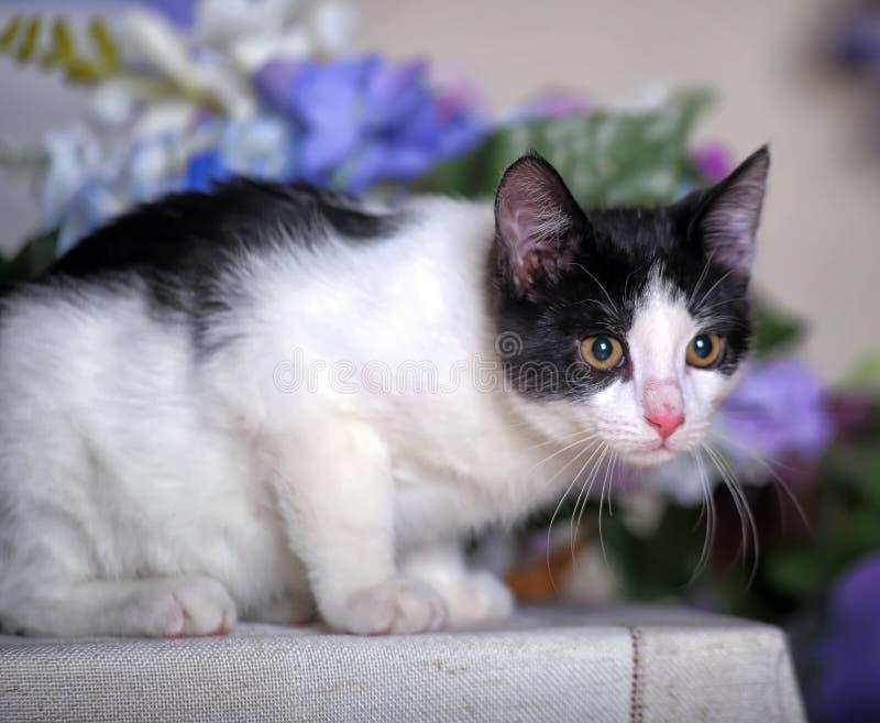 Gatito blanco y negro encantador fotografía de archivo