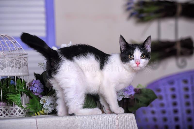 Gatito blanco y negro encantador fotografía de archivo libre de regalías