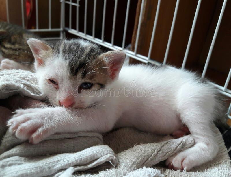gatito blanco y negro lindo imagen de archivo libre de regalías
