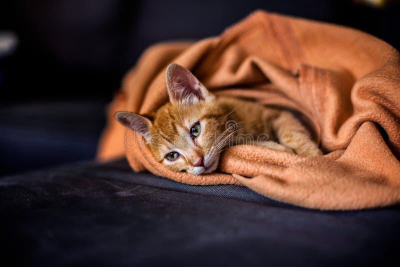 Gatito bonito del jengibre que miente en el sofá imagenes de archivo