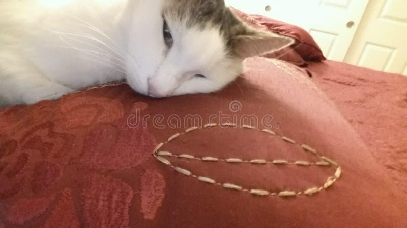 Gatito bonito que duerme antes de que ella desaparezca imagen de archivo libre de regalías