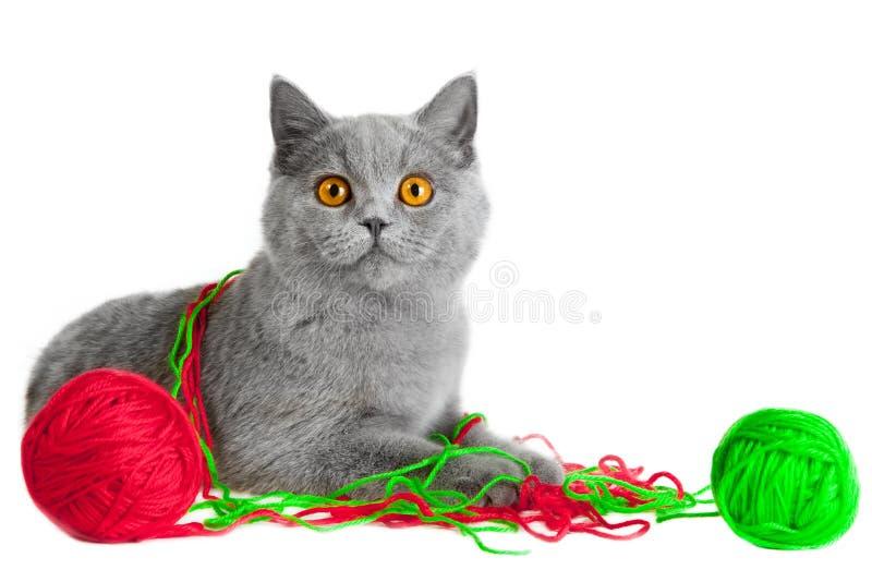 Gatito británico que juega con las bolas de cuerdas de rosca imagen de archivo libre de regalías