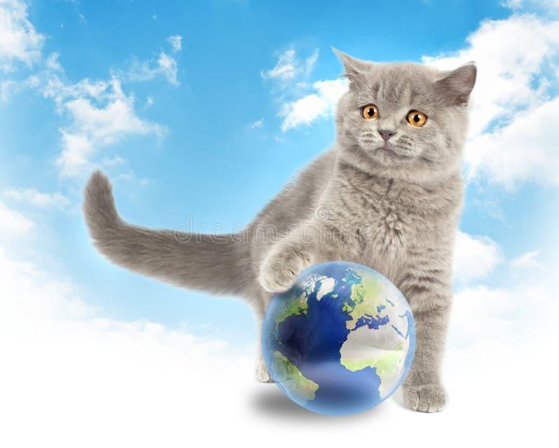 Gatito británico que juega con tierra imágenes de archivo libres de regalías