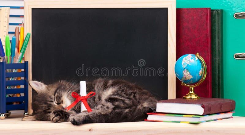 Gatito cansado foto de archivo