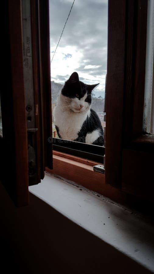 Gatito casero que es impresionante foto de archivo