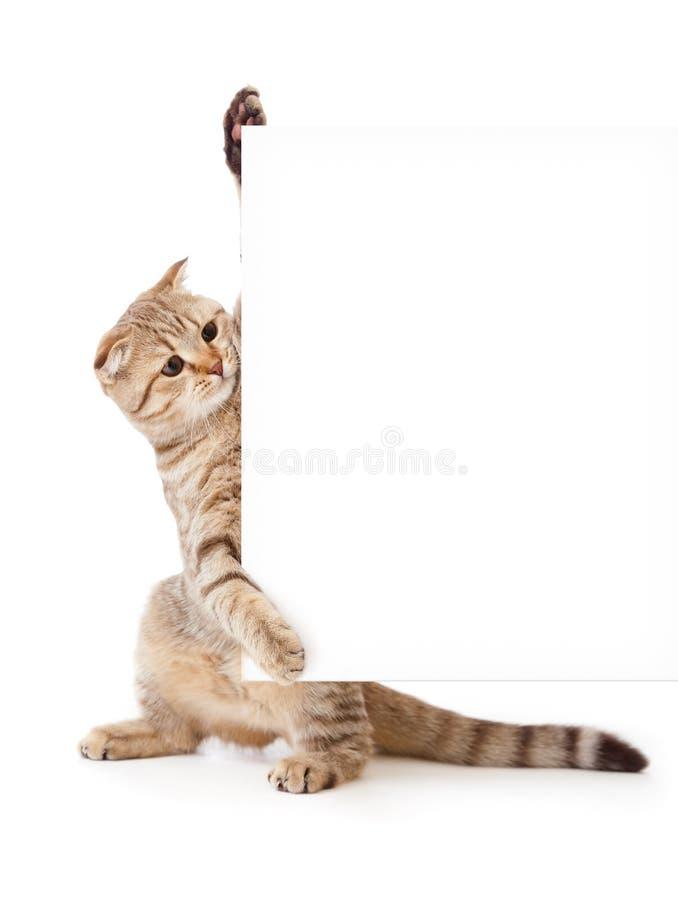 Gatito con el cartel o bandera para su texto