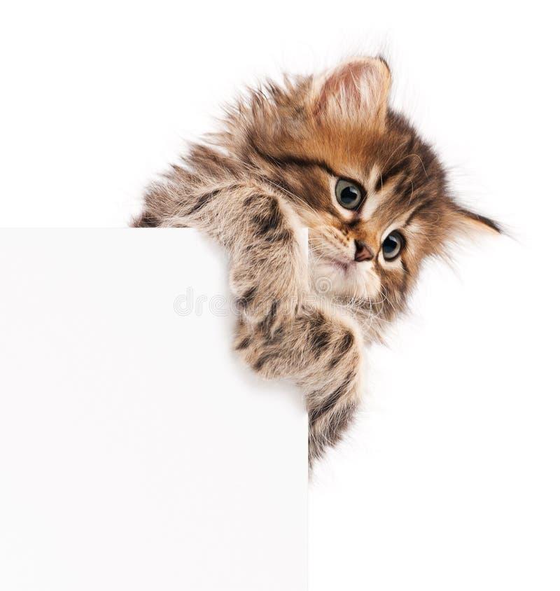 Gatito con el espacio en blanco fotos de archivo