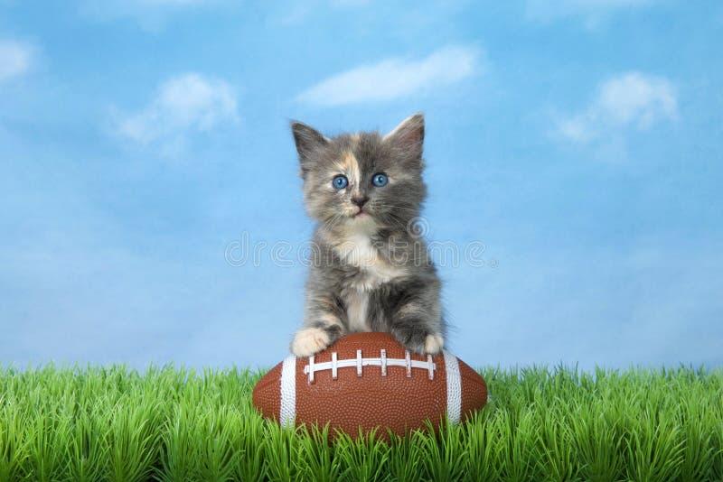 Gatito con fútbol americano en hierba verde foto de archivo libre de regalías