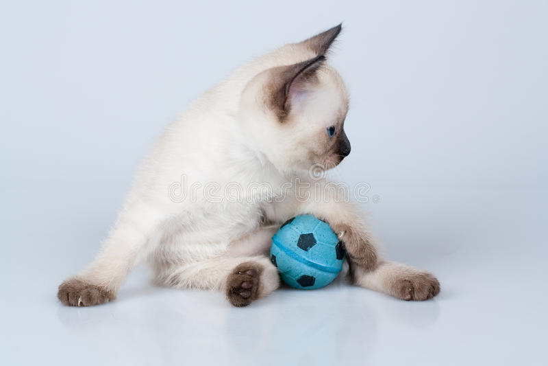 Gatito con la bola fotografía de archivo libre de regalías