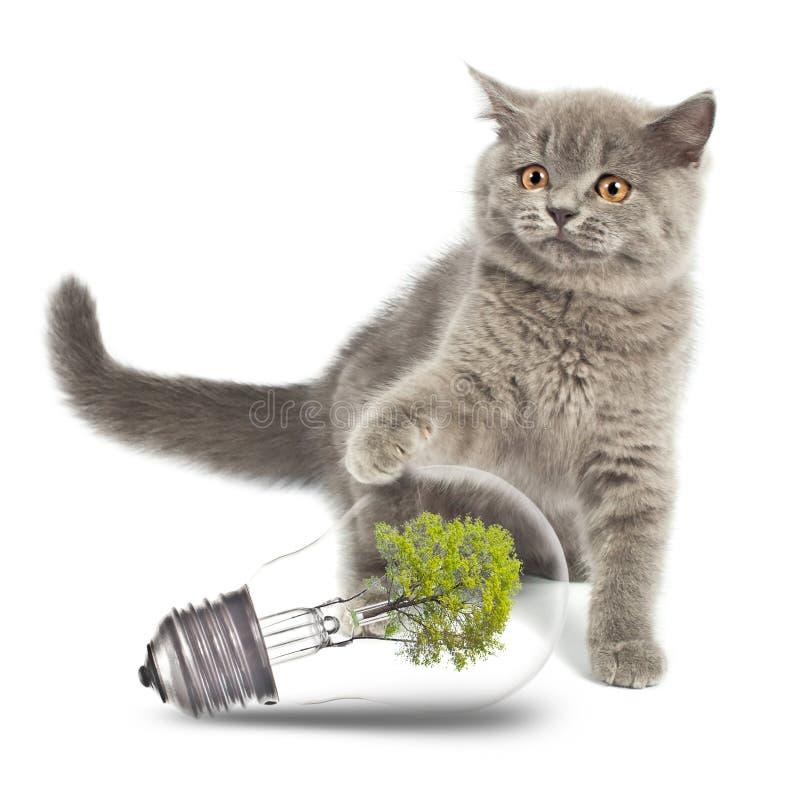 Gatito con la bombilla respetuosa del medio ambiente fotografía de archivo