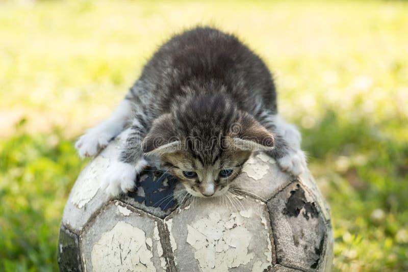 Gatito con un balón de fútbol imagenes de archivo
