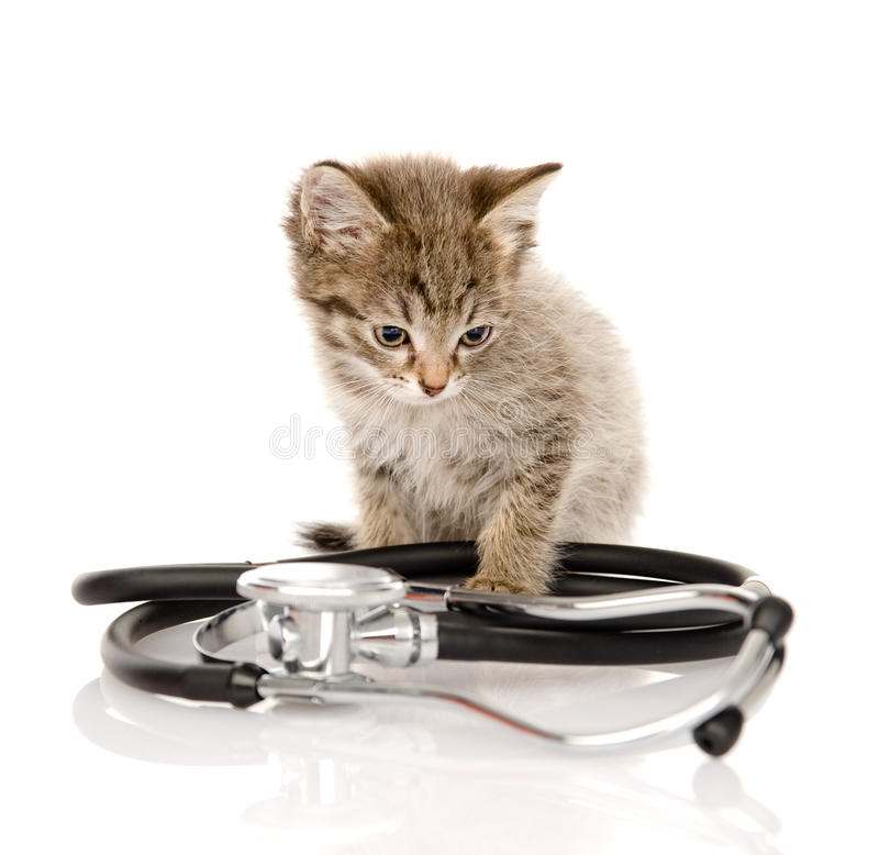 Gatito con un estetoscopio Aislado en el fondo blanco imagen de archivo libre de regalías
