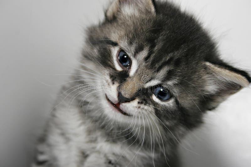 Kitty con una sonrisa imagenes de archivo