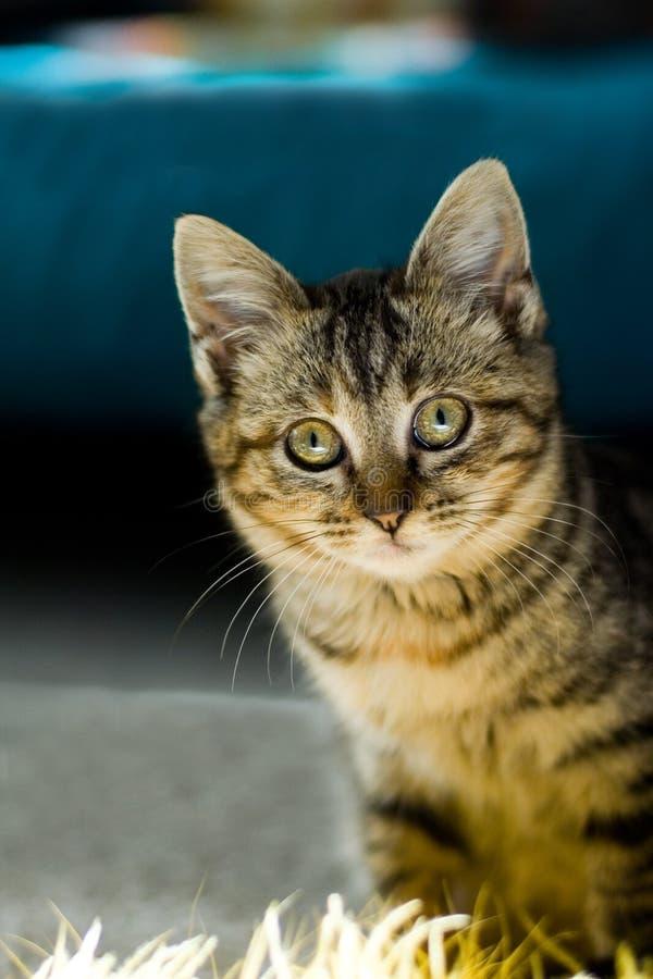 Gatito curioso fotografía de archivo libre de regalías