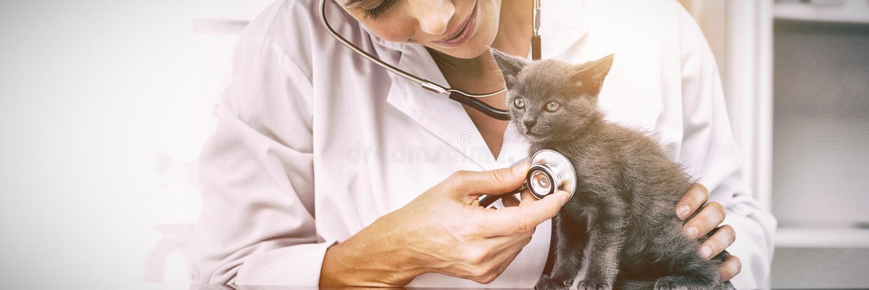 Gatito de examen del veterinario con el estetoscopio imagenes de archivo