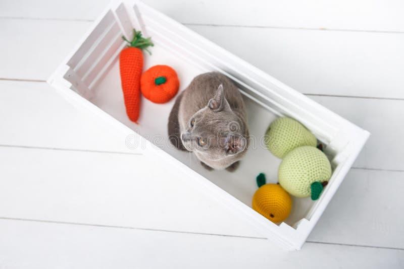Gatito de Grey Burmese que se sienta en una caja de madera con los juguetes hecho a ganchillos La visión desde la tapa imagen de archivo libre de regalías
