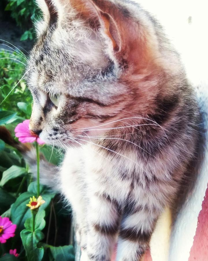 Gatito de la flor foto de archivo