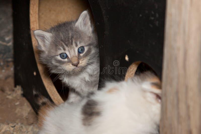 Gatito de la mirada furtiva fotos de archivo