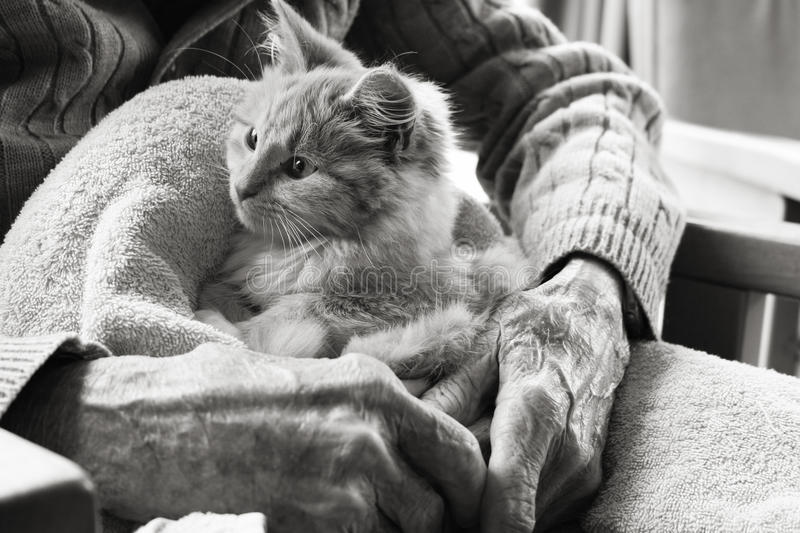 Gatito de la terapia del animal doméstico imagen de archivo
