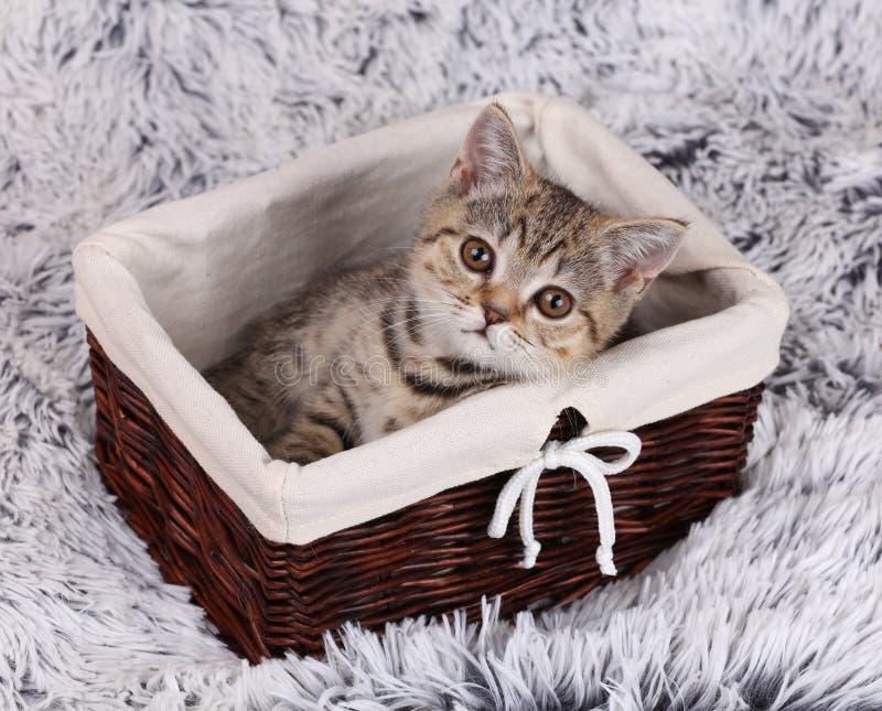 Gatito de Lttle que se sienta en una cesta imagenes de archivo