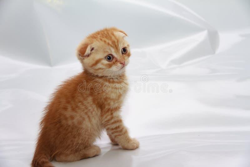 Gatito de Momo en una sesión fotográfica con su nueva familia imagen de archivo libre de regalías