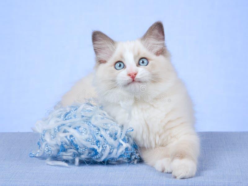 Gatito de Ragdoll con la bola azul de lanas que hacen punto foto de archivo libre de regalías
