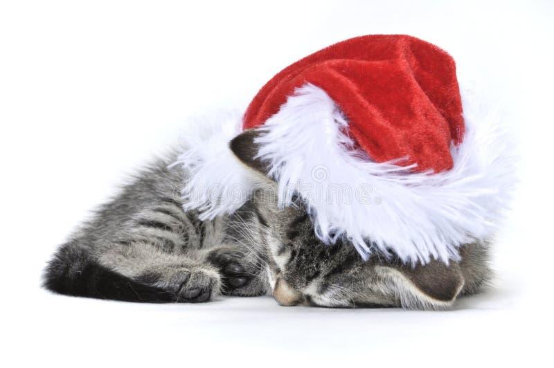 Gatito de Ragdoll que desgasta un sombrero de Santa fotografía de archivo