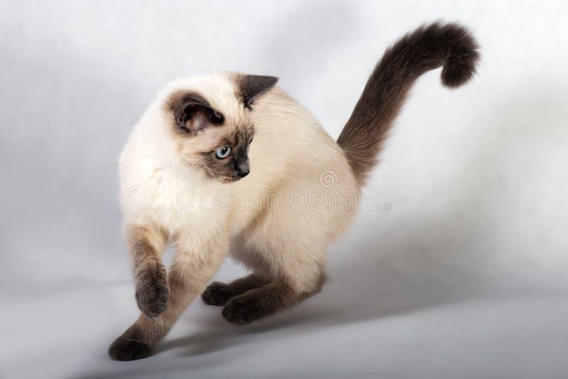 gatito del Color-punto en el movimiento fotografía de archivo
