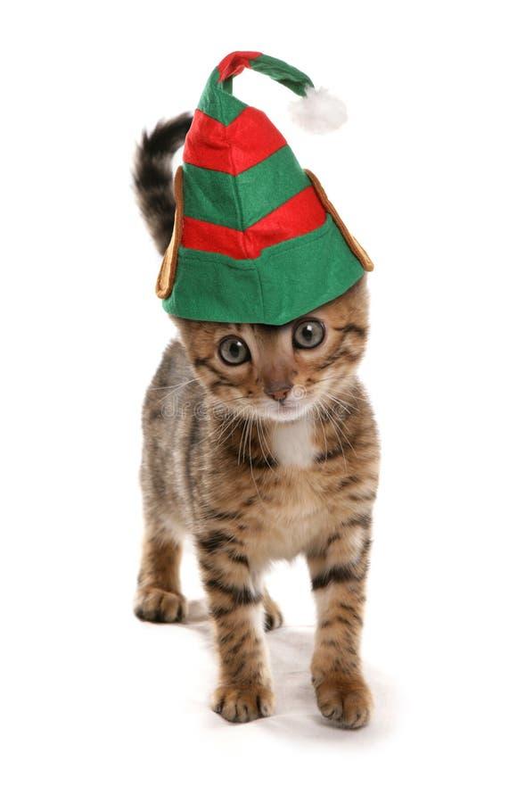 Gatito del duende imagen de archivo