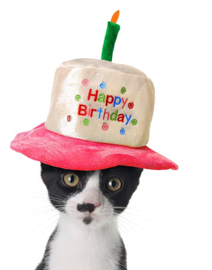 Gatito del feliz cumpleaños imágenes de archivo libres de regalías