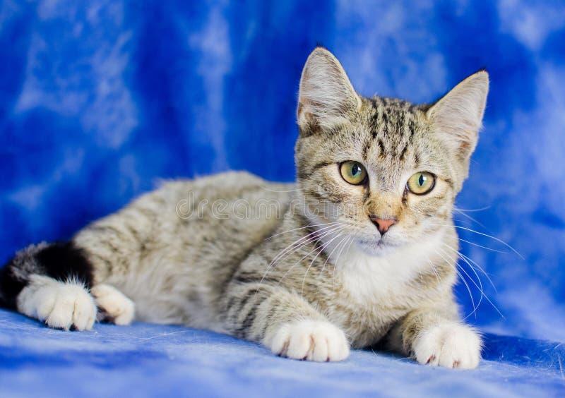 Gatito del gato atigrado imagenes de archivo