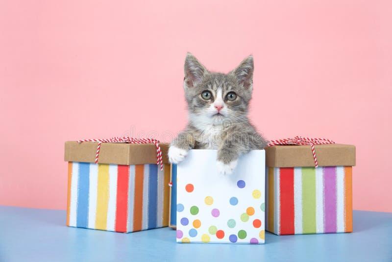 Gatito del gato atigrado del feliz cumpleaños en presentes imagenes de archivo