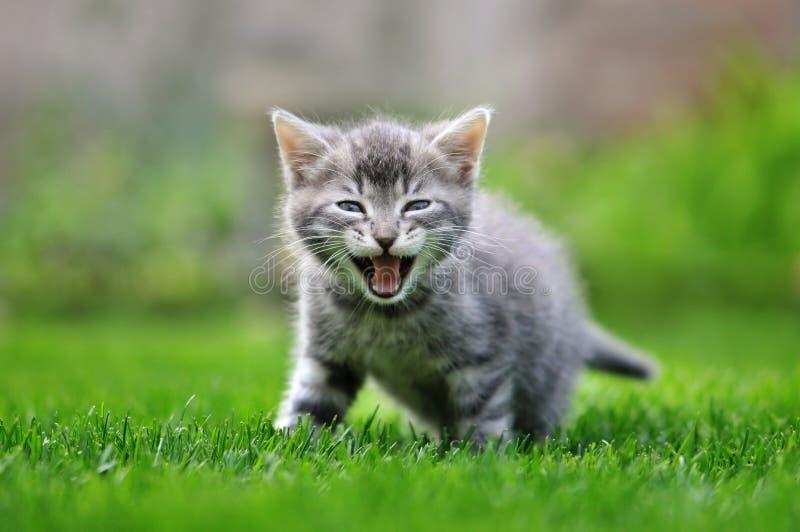 Gatito del gato atigrado en hierba imagenes de archivo