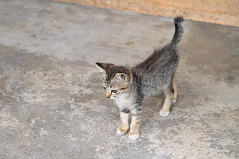 Gatito del gato atigrado en piso concreto foto de archivo