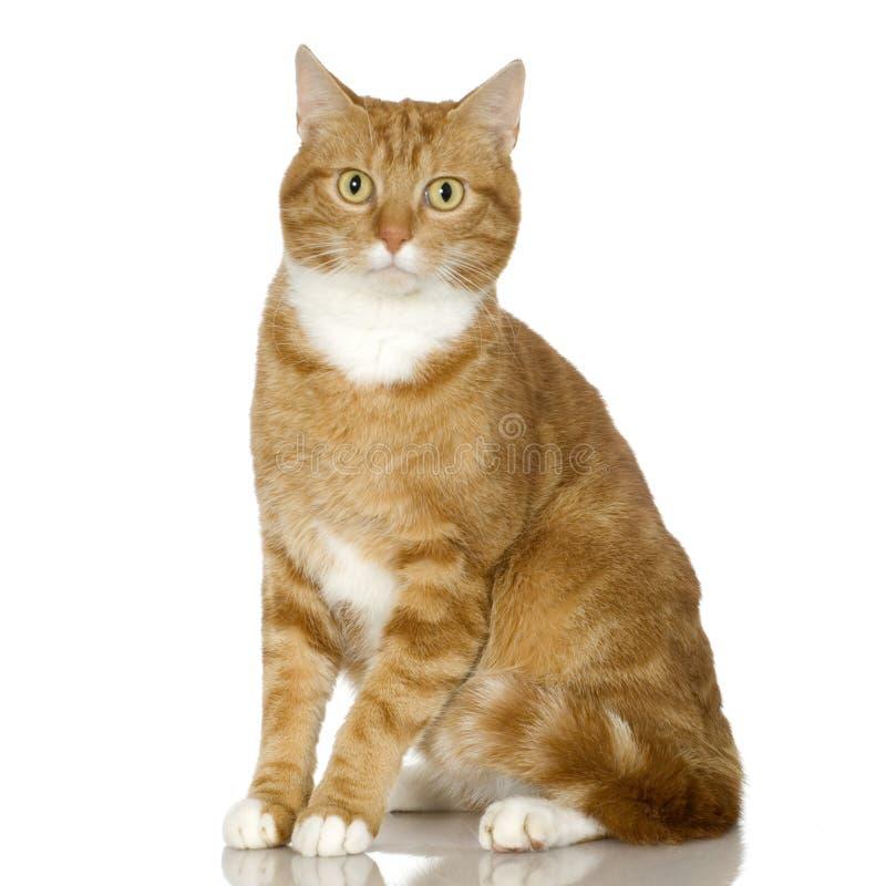 Gatito del gato del jengibre (4 años) fotografía de archivo