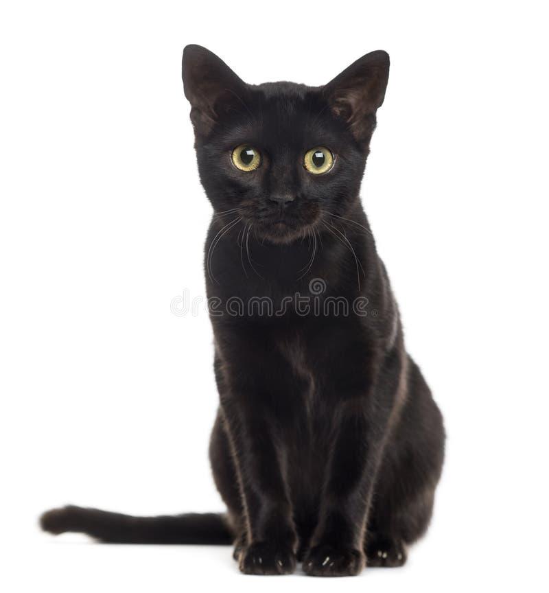 Gatito del gato negro que mira la cámara imagen de archivo libre de regalías