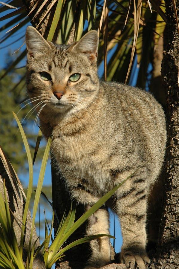 Gatito del Tabby en árbol fotos de archivo