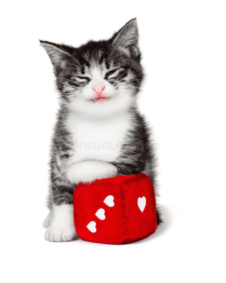 Gatito divertido con un cubo suave fotografía de archivo